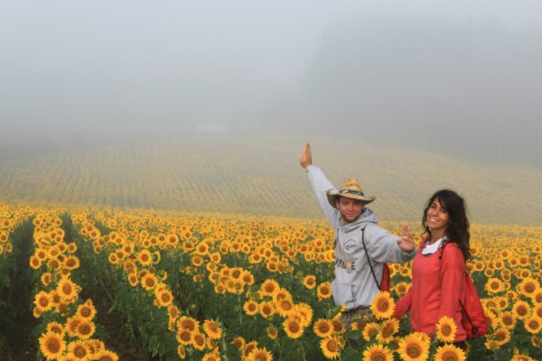Sunflower Couple - Patricia Anthony